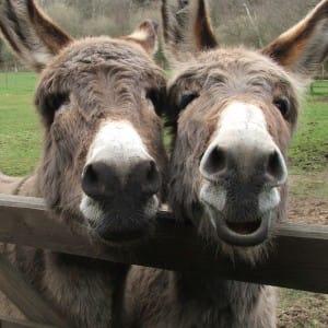 Donkey Charity